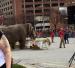 The Last Elephant Brunch
