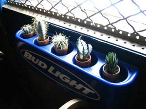 Cactusgarden